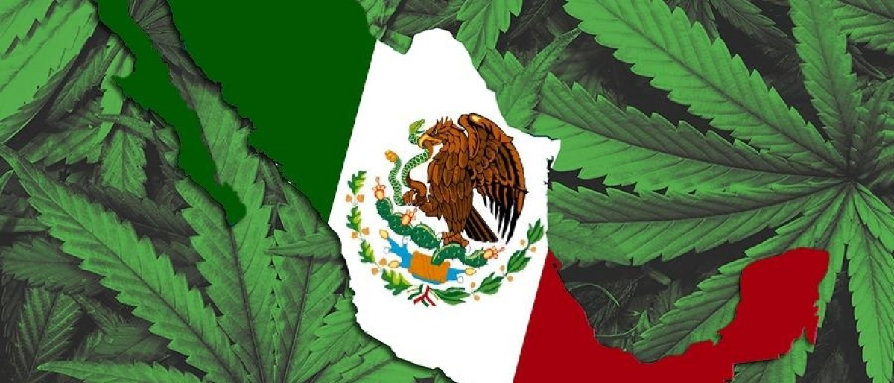 Cáñamo | Será el Congreso el que decida sobre la marihuana en México