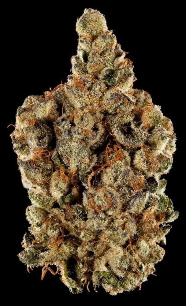 BEST HYBRID FLOWER 1st Place: Wedding Cake by New Amsterdam Naturals with Cannastar