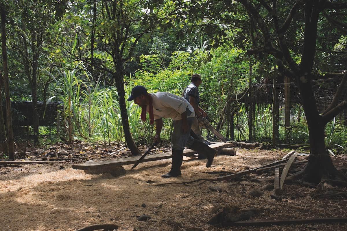 C amo la traba colombiana for Factores para seleccionar el terreno para el vivero