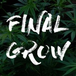 Final Grow: el documental sobre cultivo interior de cannabis