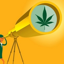 El mareante progreso del cannabis. Editorial #262