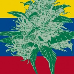 Cannabis recreativo